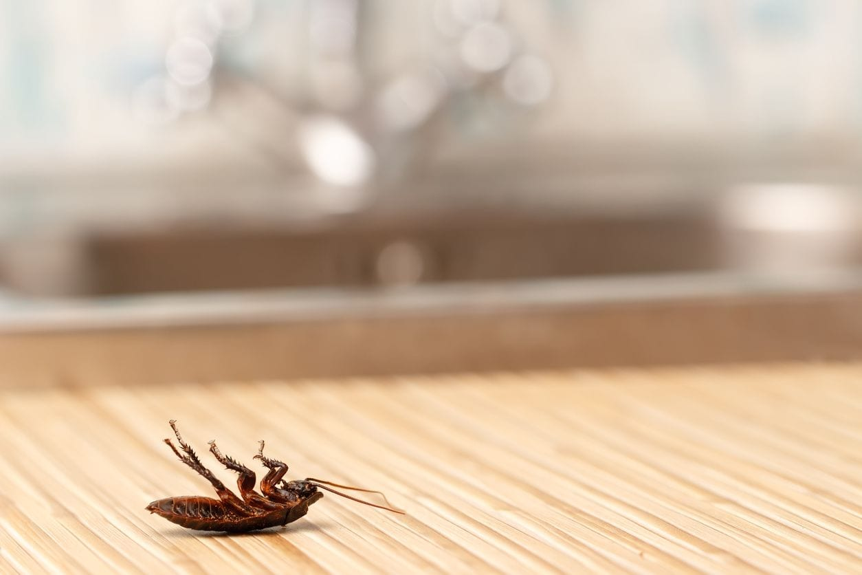 Cockroaches (Roaches)
